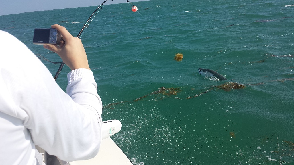 4 10 14 good local tarpon fishing in islamorada for Islamorada tarpon fishing
