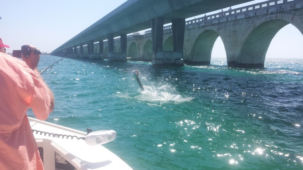 Tarpon fishing florida keys related keywords suggestions for Islamorada tarpon fishing