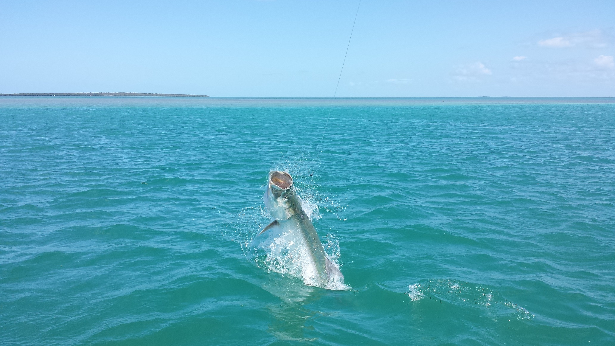 52114tarpon1 islamorada tarpon fishing for Islamorada tarpon fishing