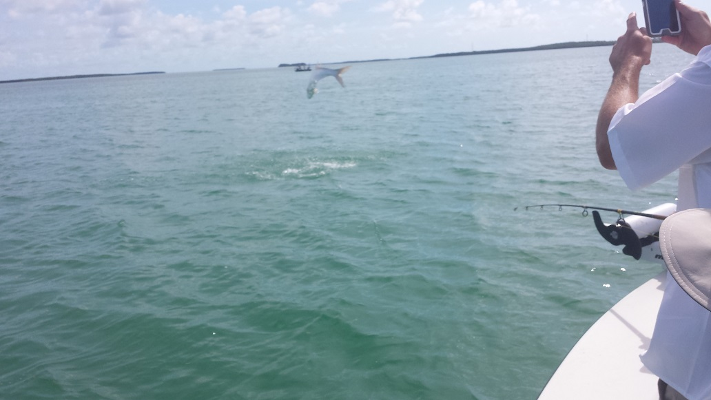 5 31 14 end of may florida keys tarpon fishing report for Islamorada tarpon fishing